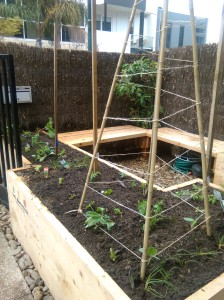 lebanese cucumbers will climb this trellis with coriander and calendula lurking below