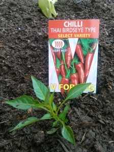 chillies to blow your head off